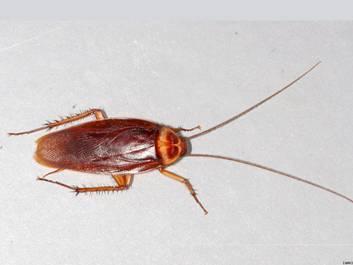 фото насекомые тараканы
